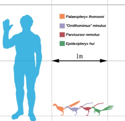 Palaeopteryx thomsoni