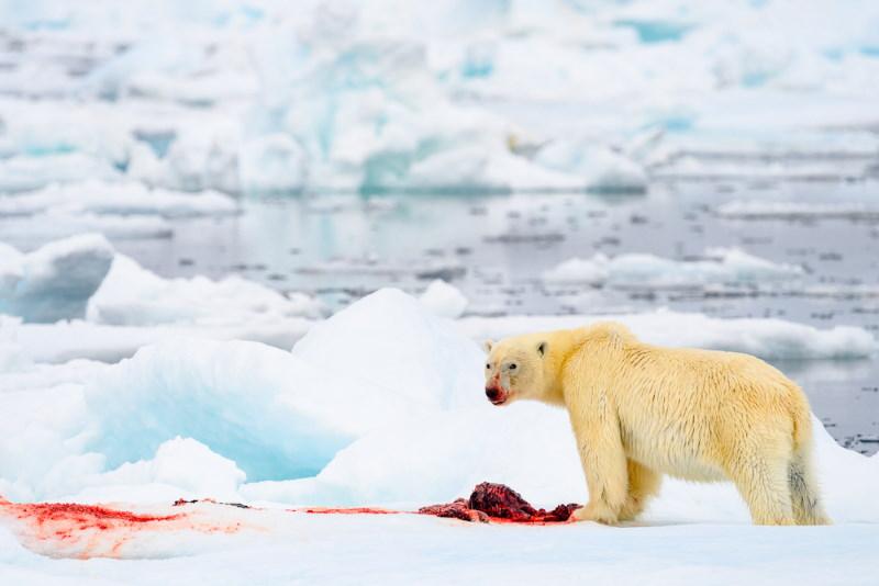 ijsbeer 3
