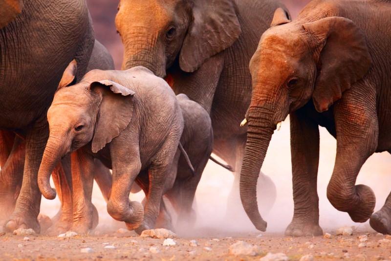 vertrapt door olifanten