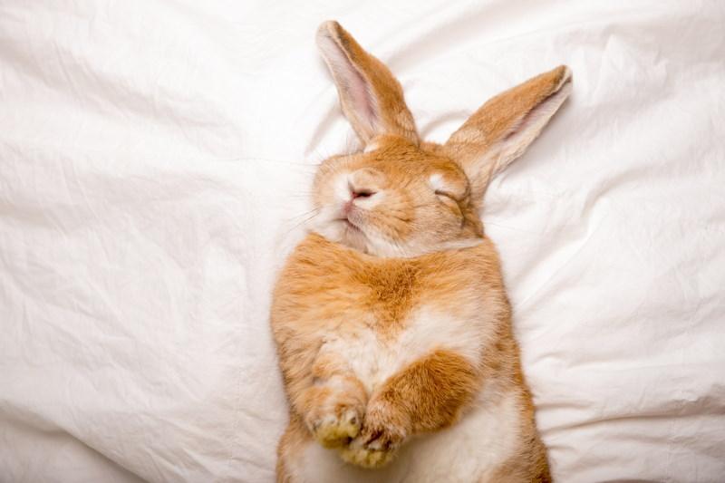 knoijn slapen