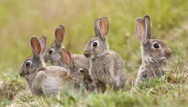 konijnen groep