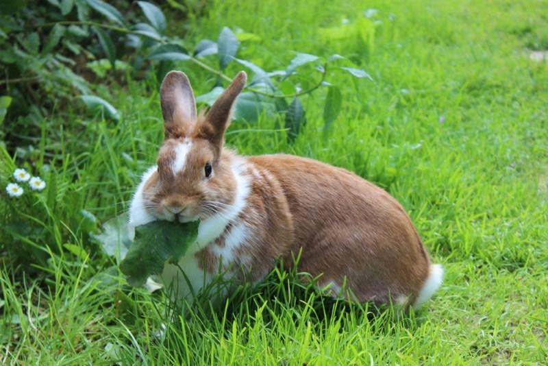 konijnen knaagdier