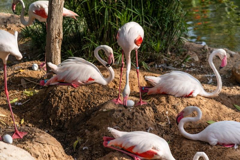flamingo egg