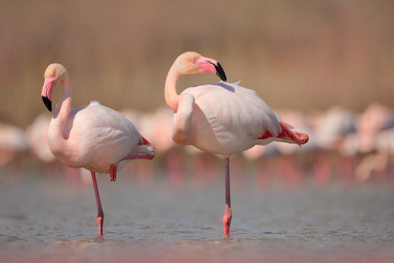 flamingo op 1 poot