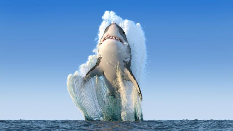 witte haai springen